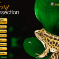 frog-dissection-feature